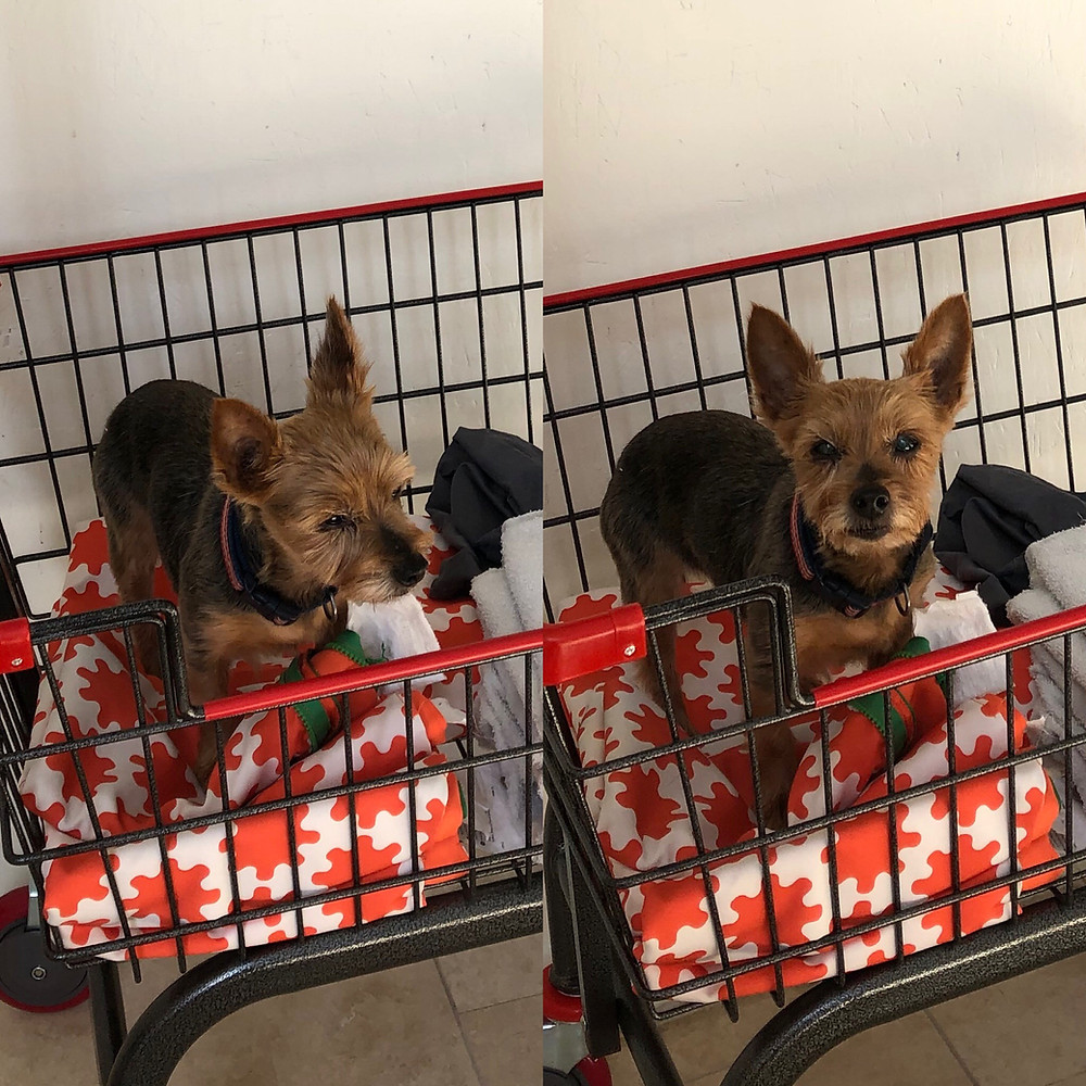 Ellie supervising laundry at Good Dog