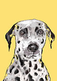 yellowDALMATION.jpg