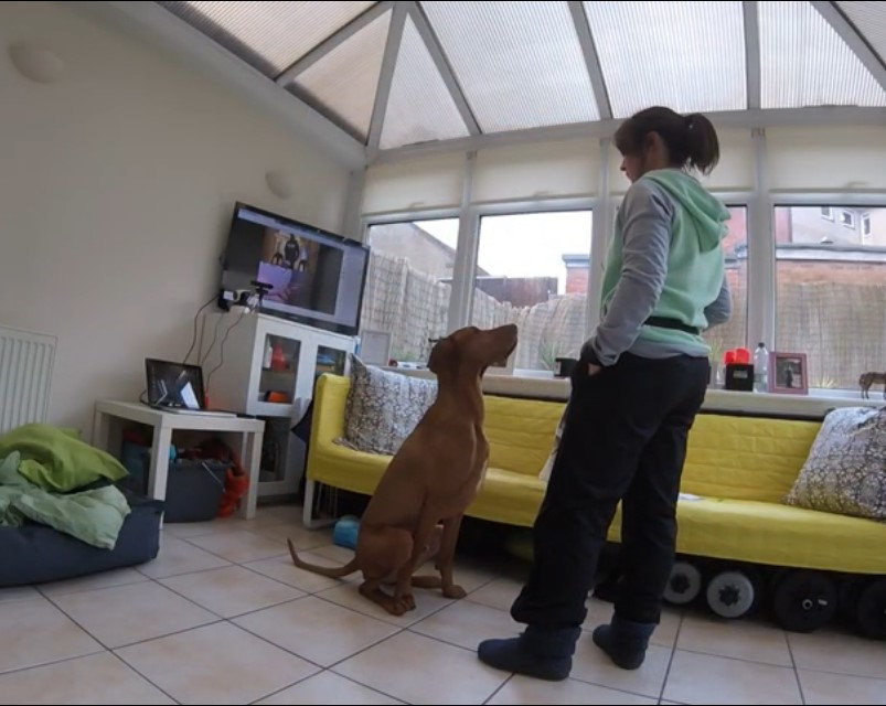 Live Online Puppy Classes