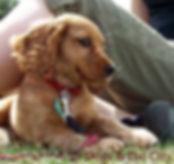 puppy_training_puppy.jpg