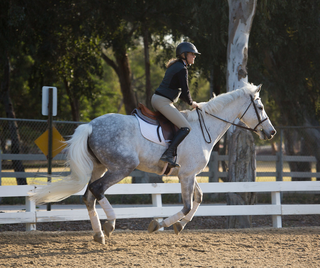 HCPEC | Horse Boarding and Stables | Orange County Equestrian