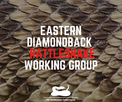 Copy of MONTANE RATTLESNAKE WORKING GROU