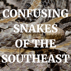 SNAKEBITE POSTER (1).png