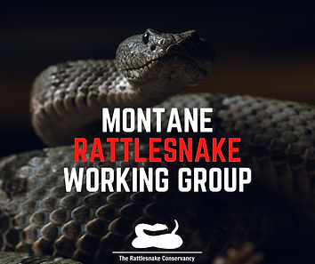 MONTANE RATTLESNAKE WORKING GROUP.png