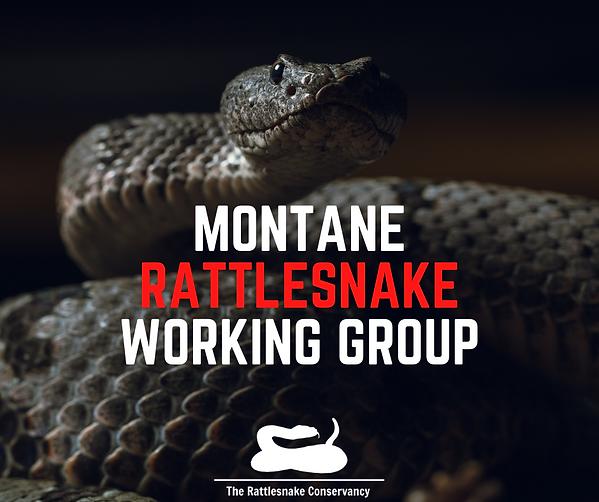 MONTANE RATTLESNAKE WORKING GROUP.png