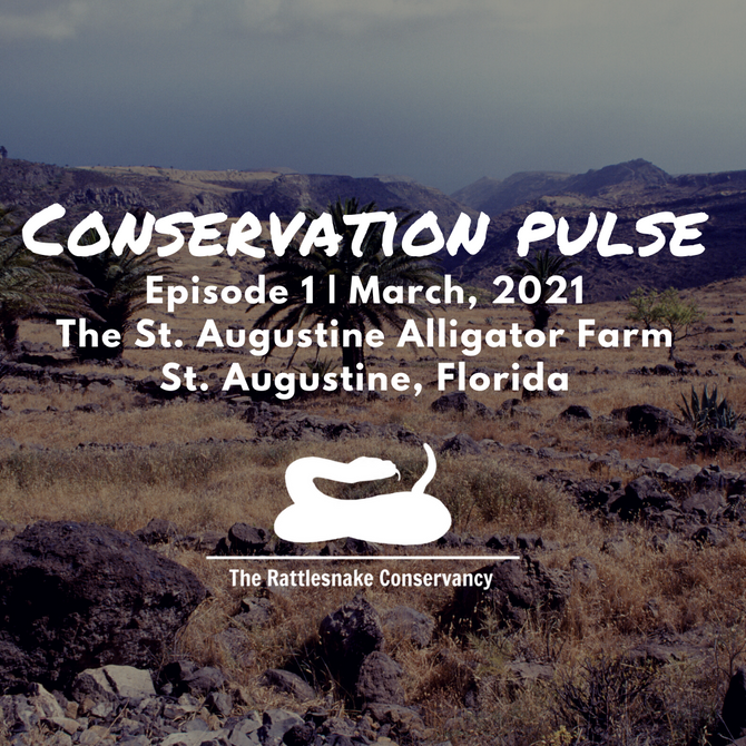 Conservation Pulse - Episode 1 at the St. Augustine Alligator Farm