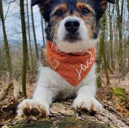 Ella & Fritz, Halstücher für Hunde, MY NAME, VELVET