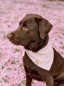 Labrador Suri - _labrador_suri - Ella &