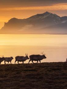 Svalbard-Expeditions-MS-Sjøveien-2021.jpg