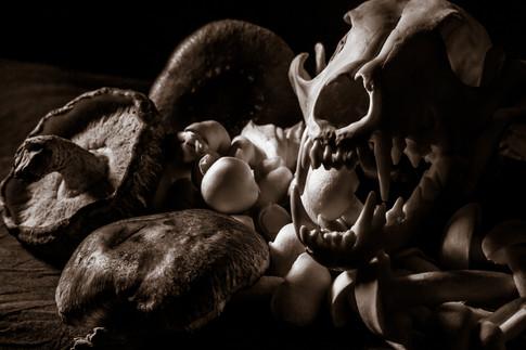 Coyote Skull & Mushrooms