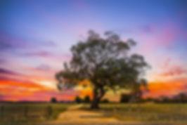 BUSH TREE (1 of 1).jpg