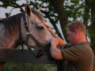 New Mares for Stonehaven Steadings