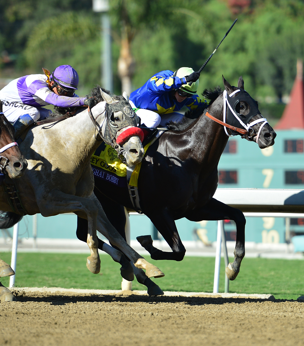 stonehaven bred champion shanghai bobby winning the breeders cup juvenile