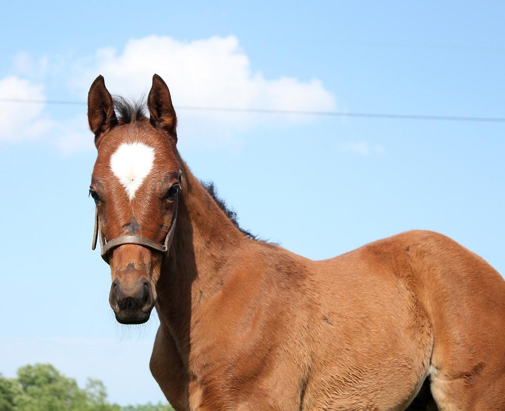 Kentucky thoroughbred sales, breeding, and boarding farm