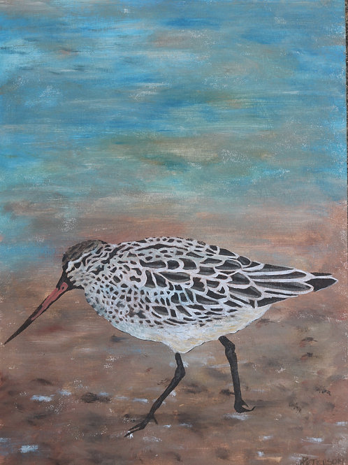Bar Tailed Godwit 2 - Hilary Peterson