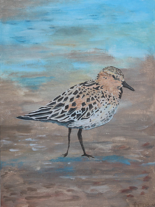 Red Necked Stint  2 - Hilary Peterson