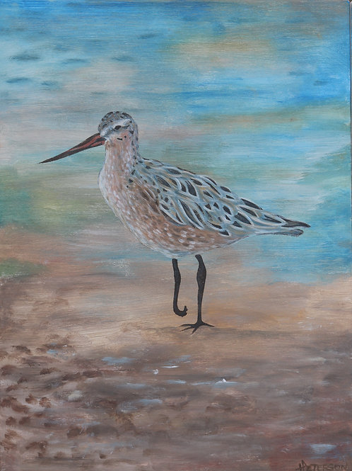 Bar Tailed Godwit 1 - Hilary Peterson