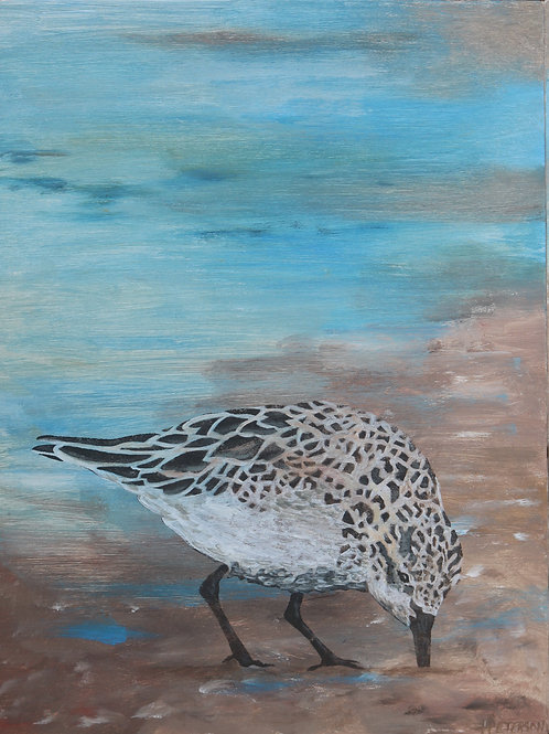 Red Necked Stint  1 - Hilary Peterson