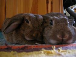 Susi & Mimi