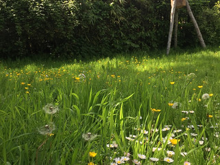 Rewilding my garden. Phase 1