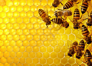 Holacracy. Organisational self management, like the bees