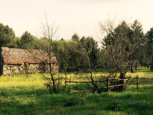 Quinta Das Abelhas