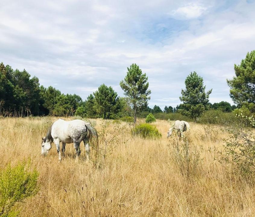 Regenerative Grazing Portugal Rewilding.