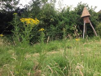 Rewilding my garden. Phase 2