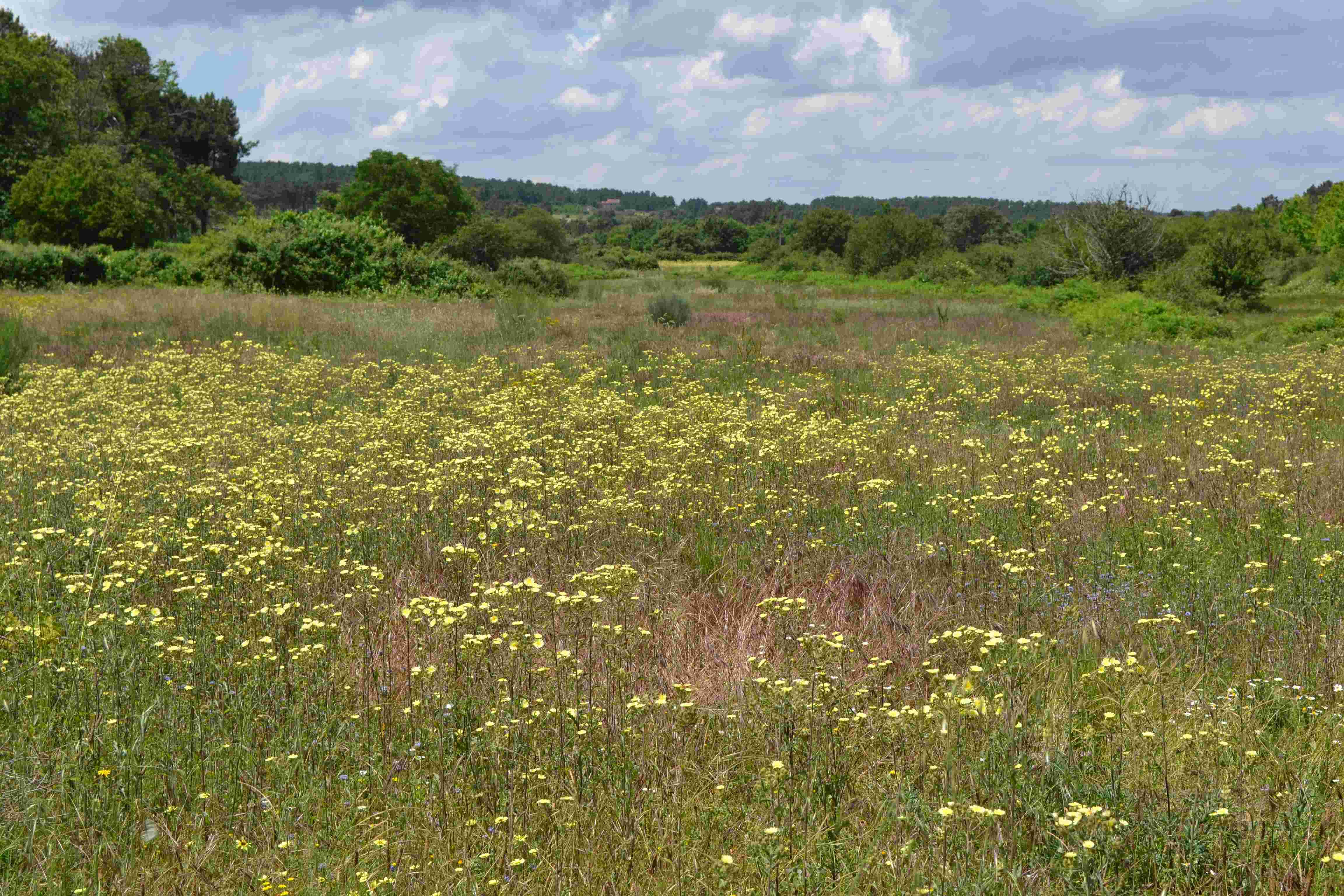 Wild flowers of Quinta Das Abelhas