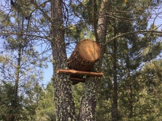 The first log hive in place, inviting in the wild bees