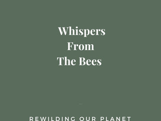 Whispers from Bees