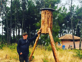Log hives: Bee rewilding in the valley