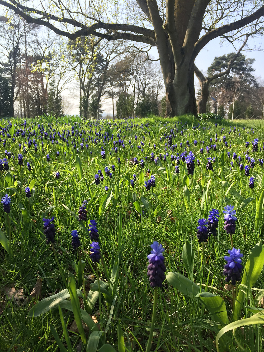 [Spring at Wisley Gardens, Surrey]