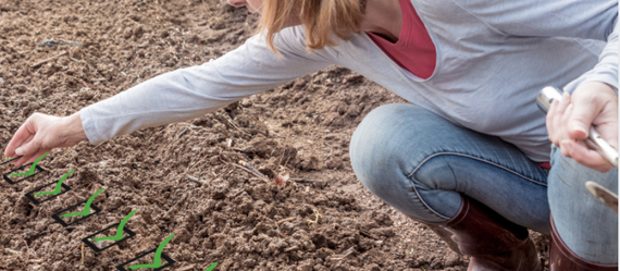 Finish Your February Gardening Projects