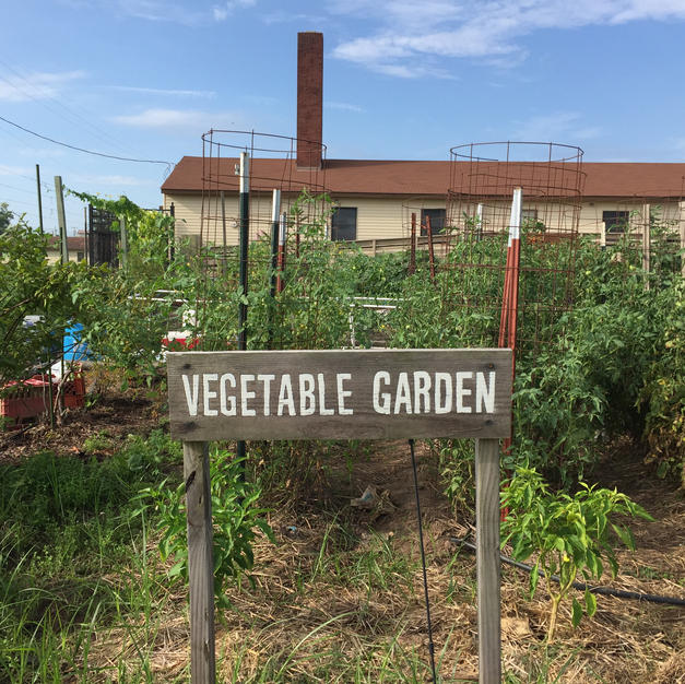 Family Vegetable Garden