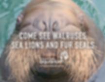 Vancouver Aquarium Walrus - Original Music by Sean William