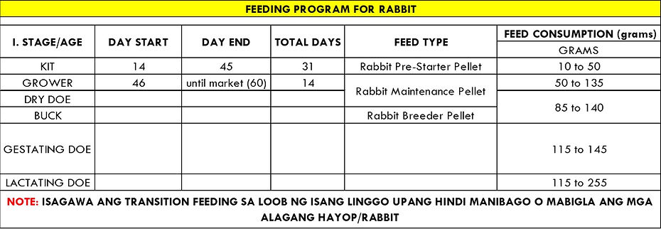 feeding rabbit.jpg