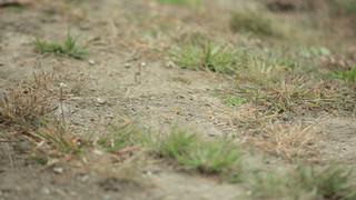 Soil/Grass