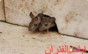 ابادة الفئران.jpg