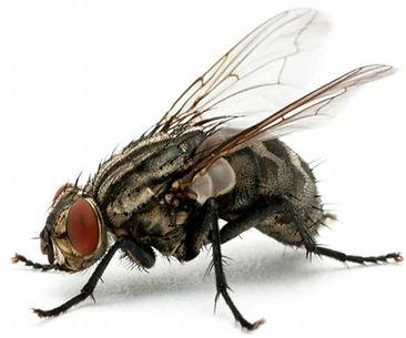 مكافحة الذباب في مصر | ابادة الذباب | مكافحة حشرات مصر
