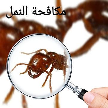 مكافحة النمل.jpg