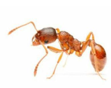 مكافحة النمل في مصر | ابادة النمل فى مصر | مكافحة حشرات