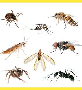 مكافحة حشرات مصر | ابادة حشرات مصر