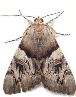 مكافحة العتة | ابادة العتة | مكافحة حشرات مصر