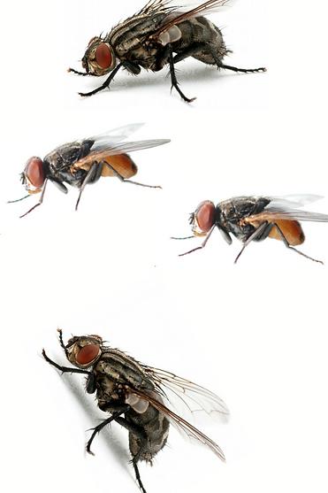 مكافحة الذباب.png