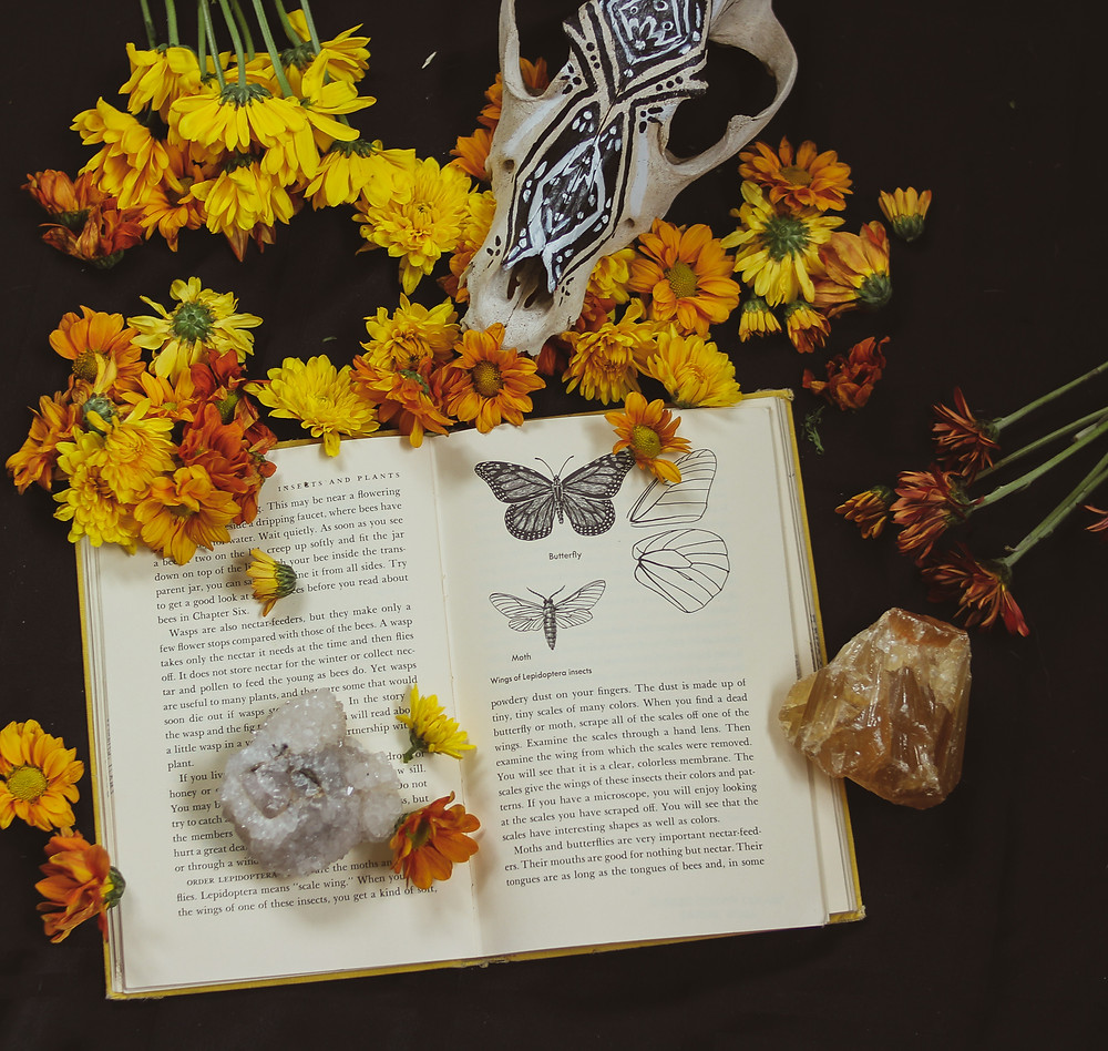 An open book surrounded by marigold flowers, with a painted fox skull in the background and a crystal laying on an open page
