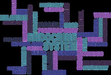 Endocrine-System-768x516.png