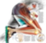 fisiologia-ok-1.jpg