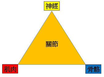 NMS joint triangle.jpg
