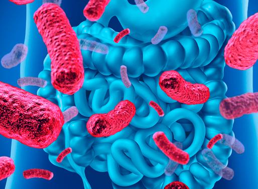 A Importância da Microbiota